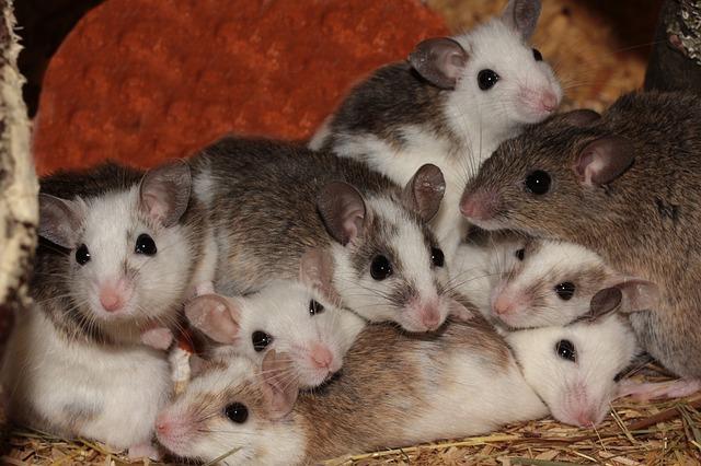 Von Menschen Und Mäusen – Mythos Sicherheitsfaktoren