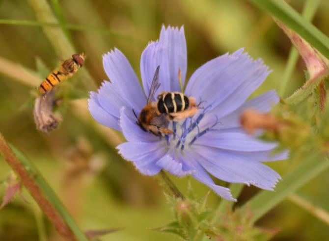 Das ALDI Pestizidverbot – Gut Für Umwelt- Und Verbraucherschutz?